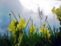 polnekwiaty