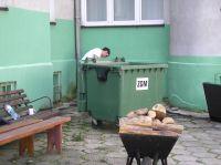photo6